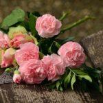 バラの病気と対策、初心者はこの二つをマスターしよう!