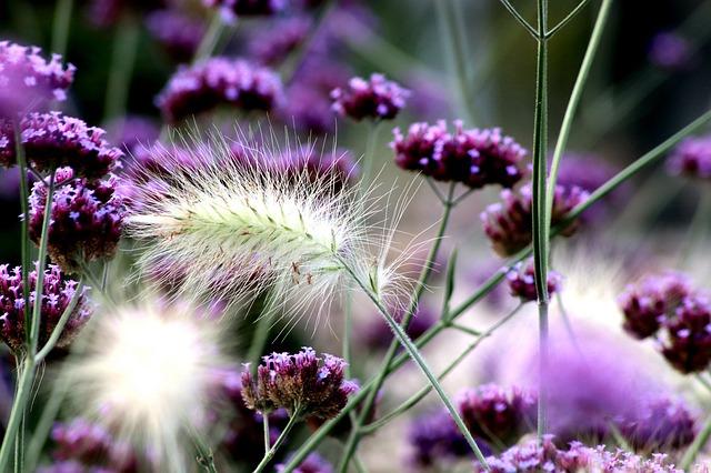 バラに合う宿根草