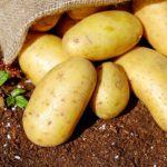 ジャガイモの植え付け方法、農家から学ぶ種の準備から収穫保存まで