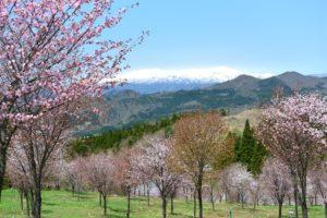 桜峠裏磐梯